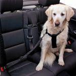 Kerbl Cinto Segurança P/cão S