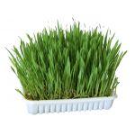 Kerbl Ervas Cultiváveis De Roer 100g
